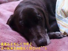2013.12.31【寄付報告】